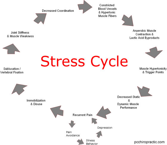 Workplace Stress Cycle Diagram Diy Enthusiasts Wiring Diagrams